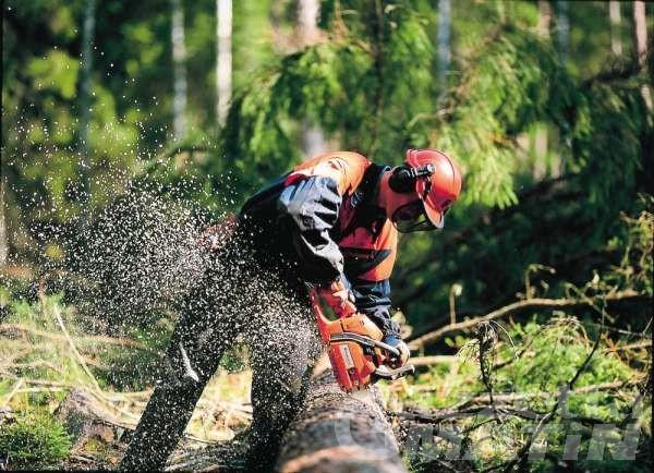 Enti locali: Cpel approva elenco dei lavori forestali, previsti 1.752.000 per il 2021