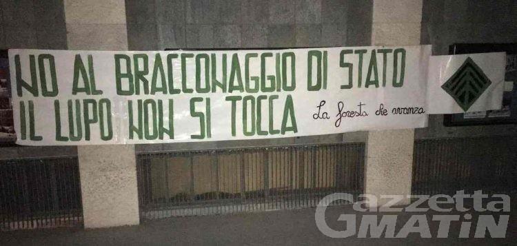 Lupi in Valle d'Aosta: «no al bracconaggio di Stato»