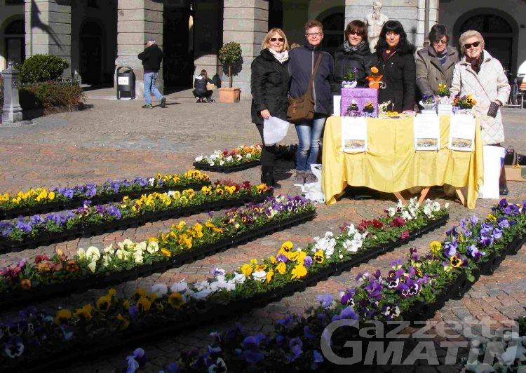 Solidarietà: 4 mila euro grazie ai vasetti di viole