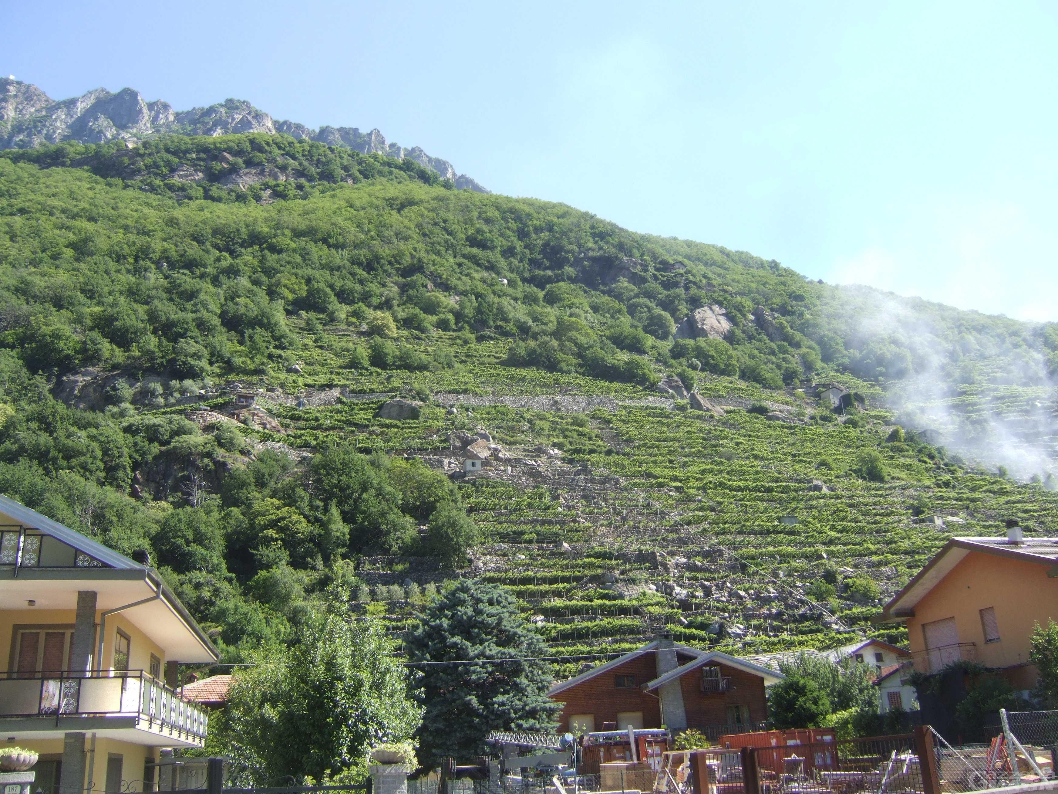 Vini Doc Valle d'Aosta: l'associazione dei viticoltori chiede un Consorzio di tutela