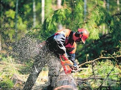 """Cantieri forestali, Alpe e Pd denunciano: """"E' emergenza"""""""