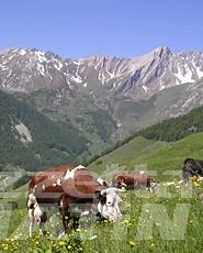Agricoltura: l'Agea dà il via libera al pagamento delle domande uniche PAC 2007-2013