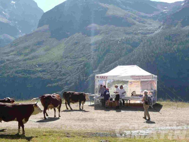 Alpages Ouverts: sabato porte aperte in alpeggio