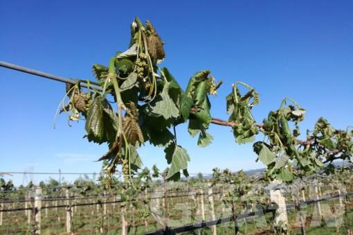 Agricoltura: aiuti per i danni causati da condizioni atmosferiche avverse
