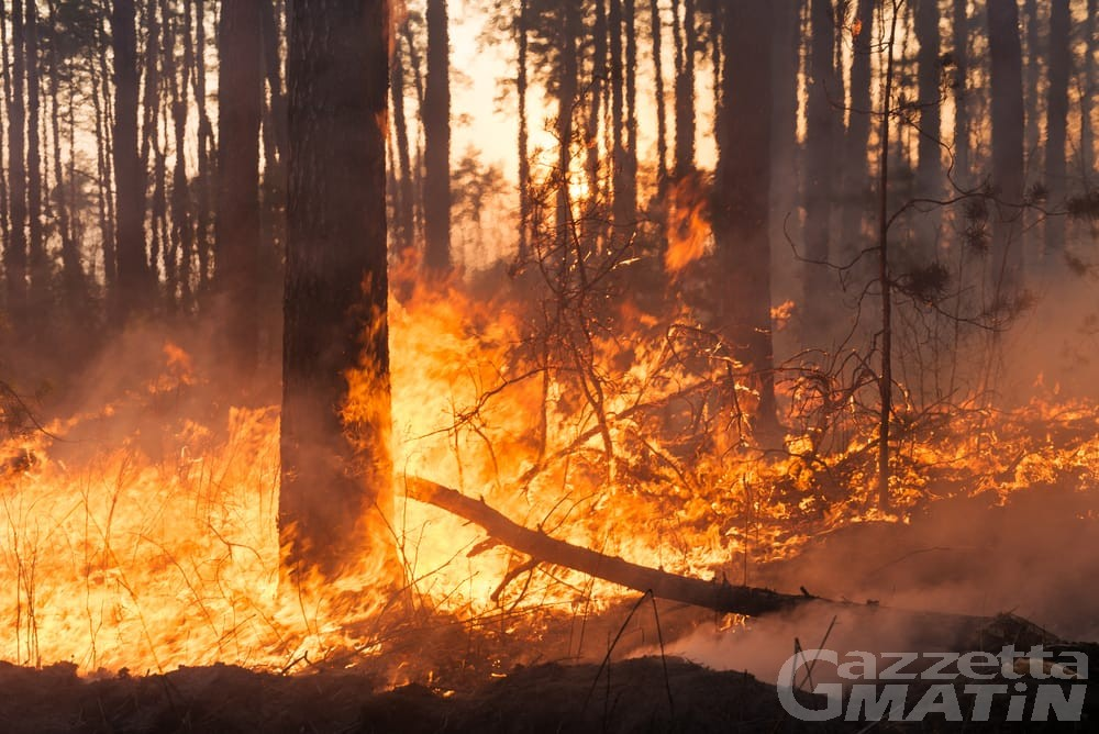 Lillianes, un incendio distrugge 5 ettari di bosco