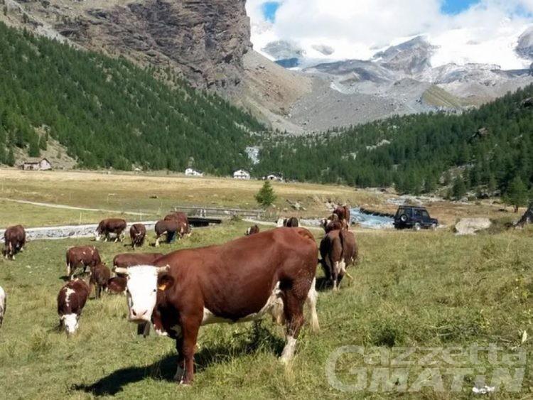 Zootecnia: 205 mila euro per rassegne e fiere autunnali dell'Arev