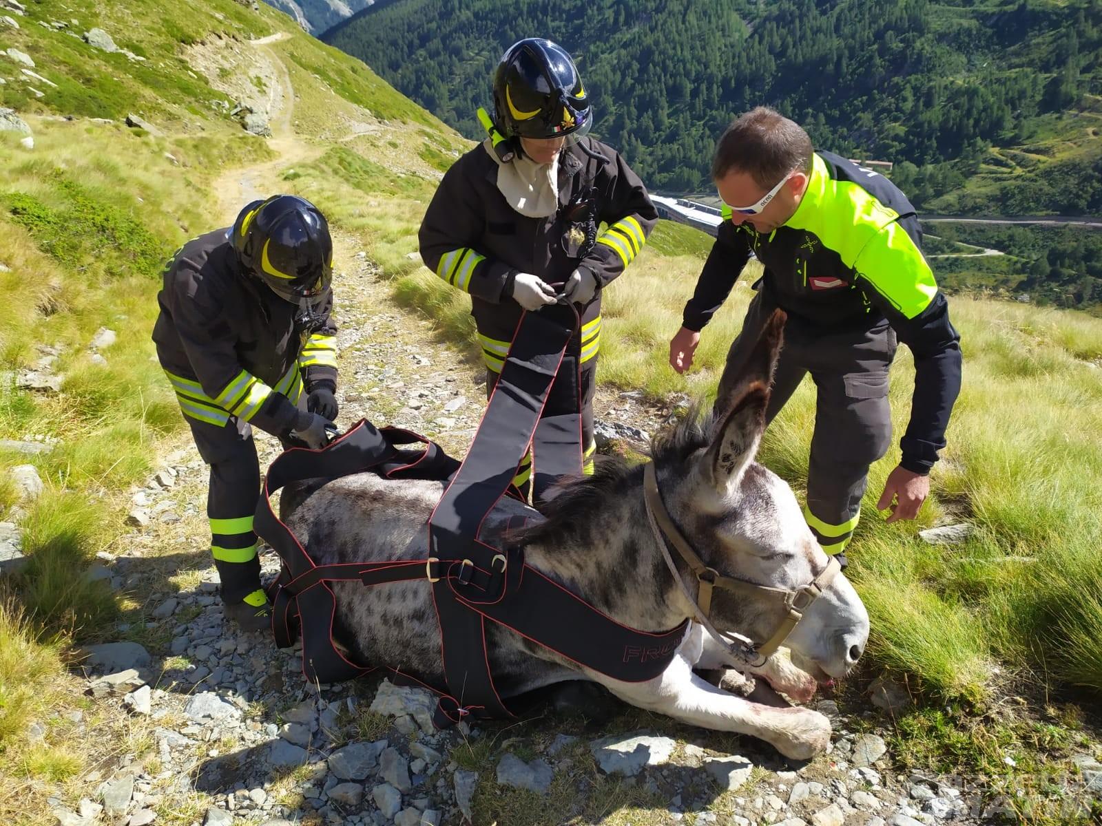 Saint-Rhémy-en-Bosses, tre asini precipitano nel torrente: interviene anche l'elicottero per salvarli