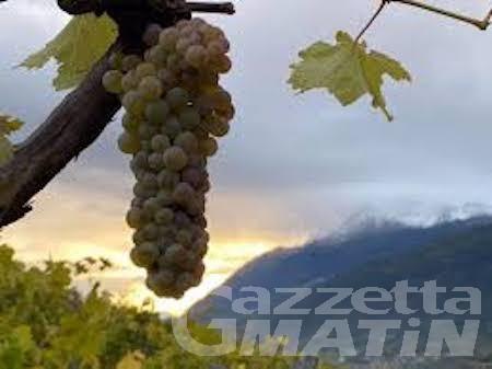 """Vini: 6 """"Tre Bicchieri"""" Gambero Rosso in 6 anni, Rosset Terroir azienda agricola da Champions"""