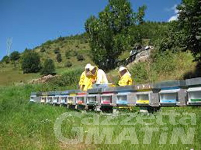 Apicoltura, 100 mila euro per i danni subiti causa maltempo