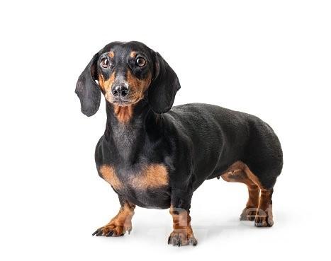 Morgex, automobilista salva un cane che vagava spaventato in autostrada