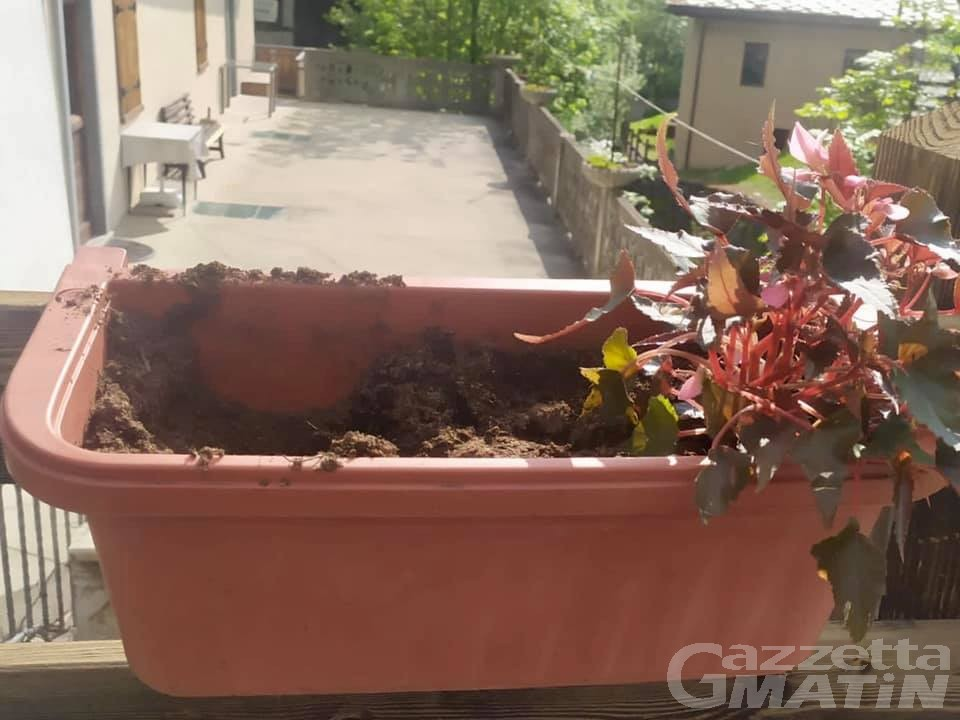 Etroubles: rubate le piante (appena posizionate) dalle fioriere del borgo