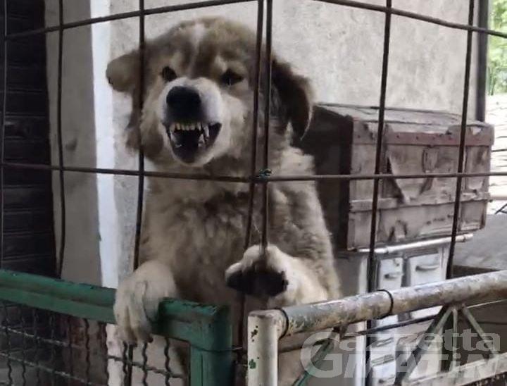 Cane maltrattato a Montjovet salvato dalla Forestale: la Procura chiede due decreti penali di condanna