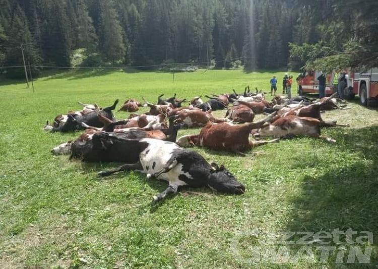 Strage di bovini: nessuna risposta dopo le indagini della Forestale