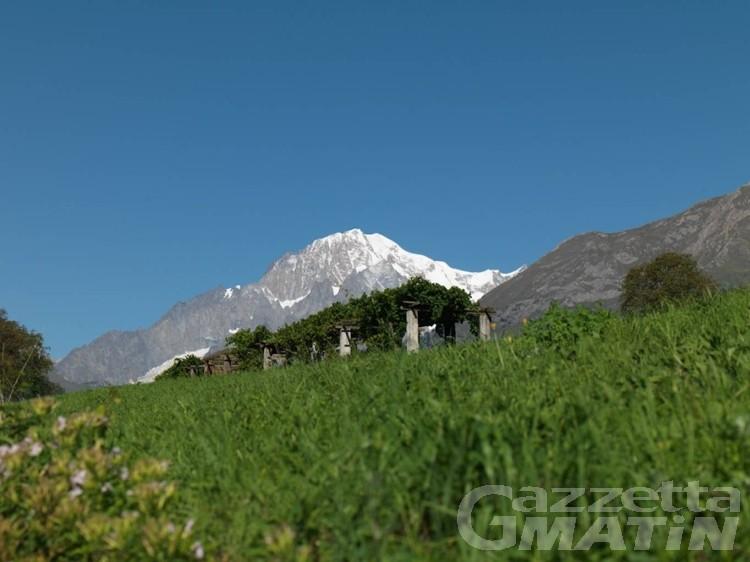 Vini, la Cave Mont Blanc brilla ai Decanter World Wine Award