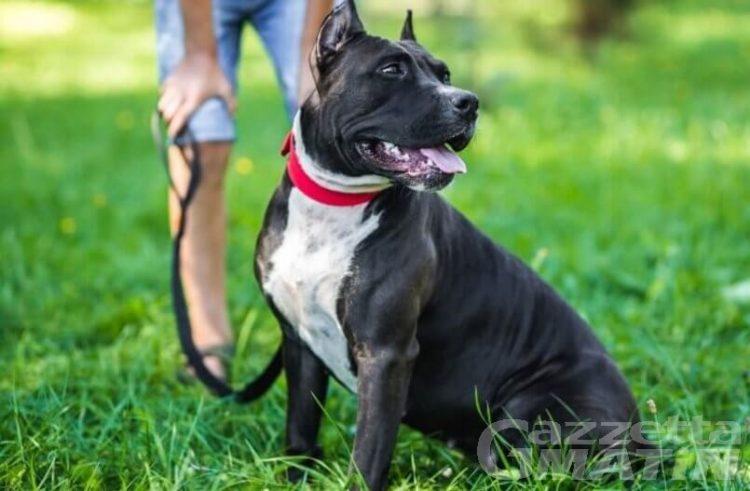 Animali: patentino per proprietari di cani, un corso del Celva