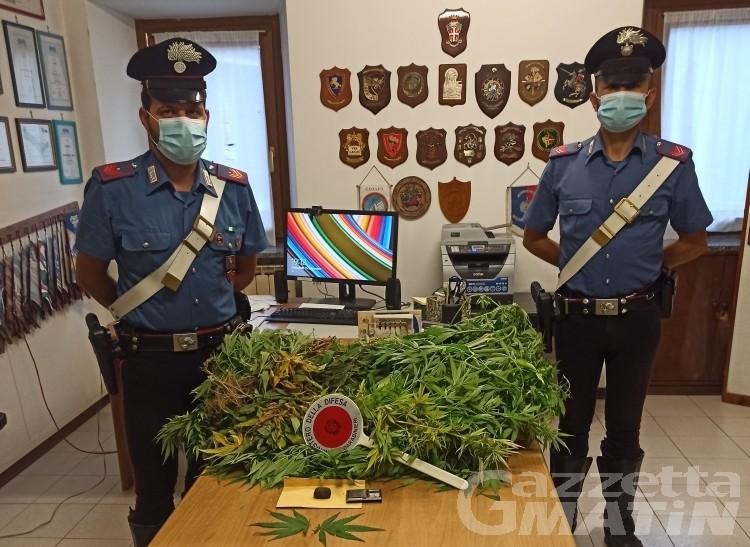 15 grammi di hashish e 5 piante di marijuana in casa, denunciato