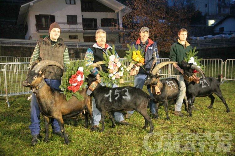 Batailles des chèvres: la terza volta di Ido Berard