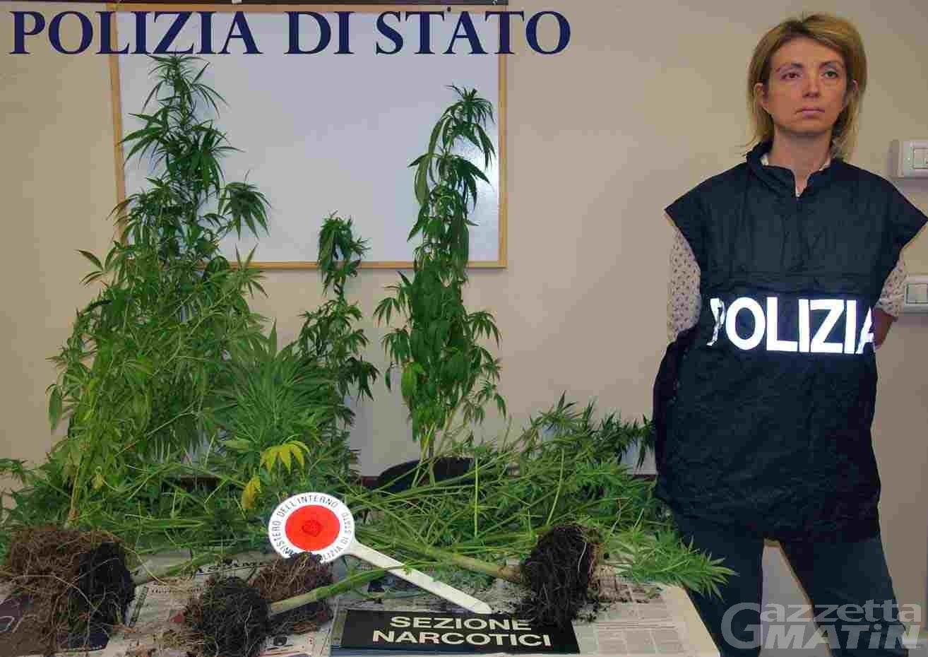 Sequestrate 12 piante di marjuana