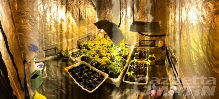 144 piante di marijuana in mansarda, denunciato