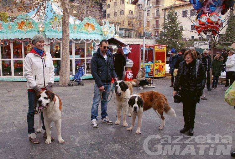 Cervinia: i cani San Bernardo sfilano in quota