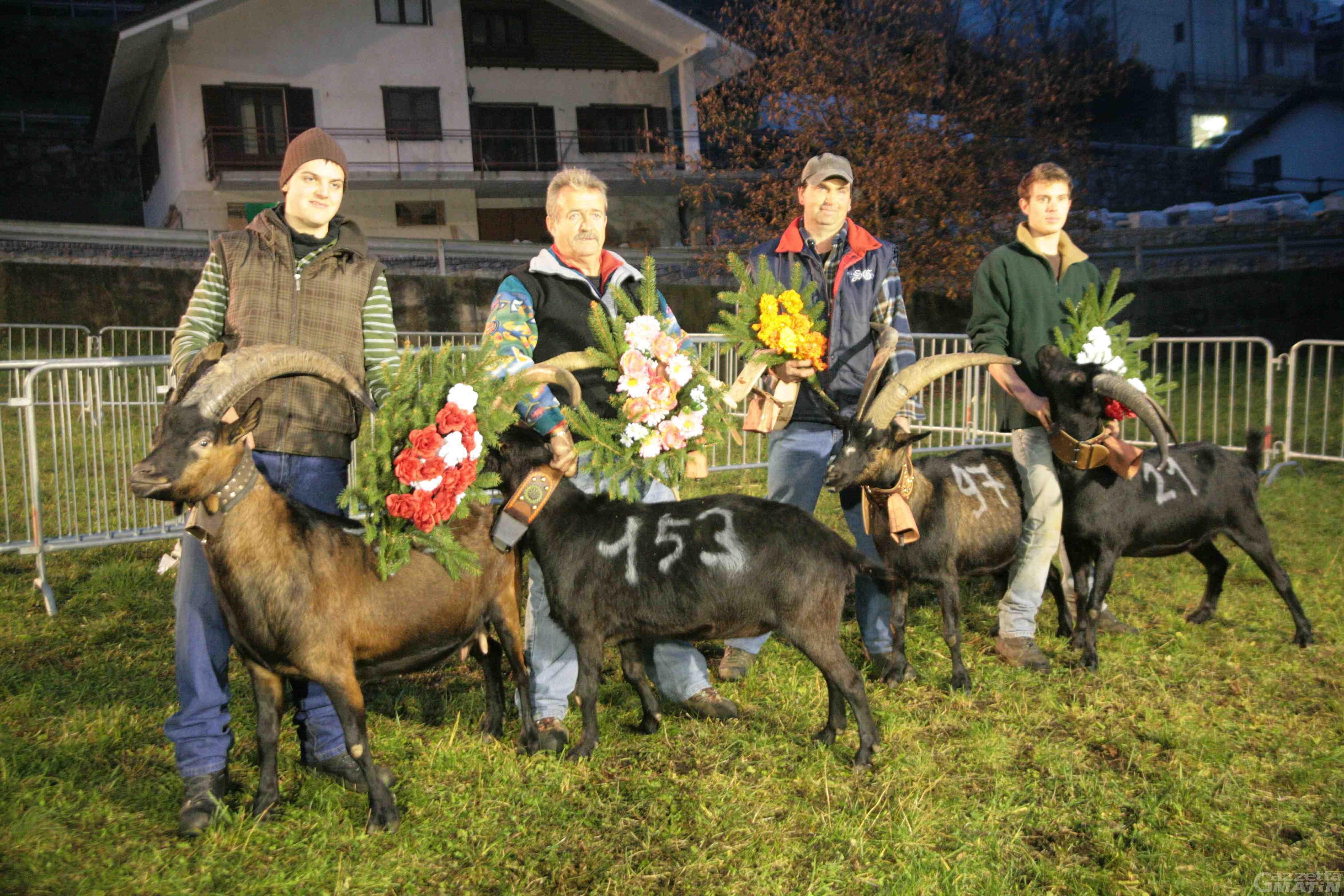 Maltempo: rinviata la finale della Batailles des chèvres