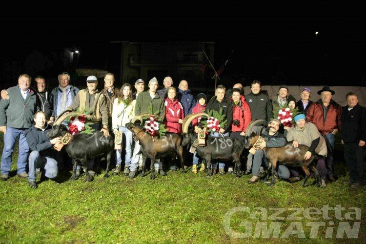 Batailles des chèvres: bosquet a Mourina, Margot, Nera e Tranquilla
