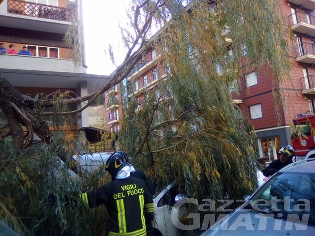 Aosta: crolla un albero in corso Ivrea