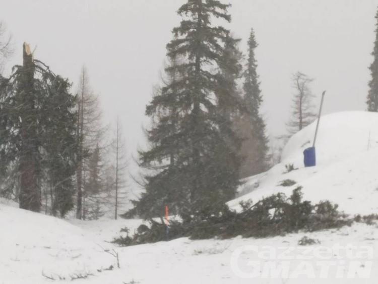 Forte vento: pianta travolge coppia torinese in Valnontey