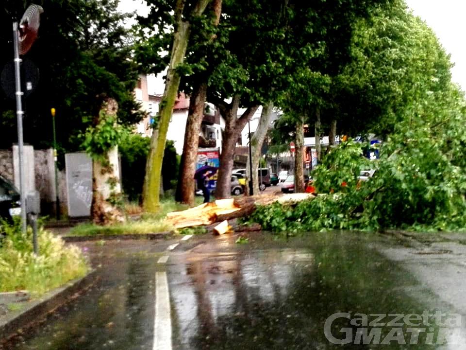 Temporale: strade chiuse per la caduta di piante