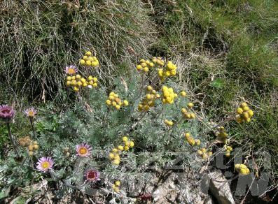 Artemisia: a Gressoney-Saint-Jean una due giorni dedicata a piante e fiori