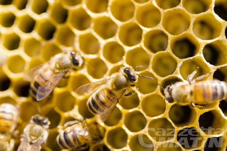 Apicoltura: piano regionale contro la varroa