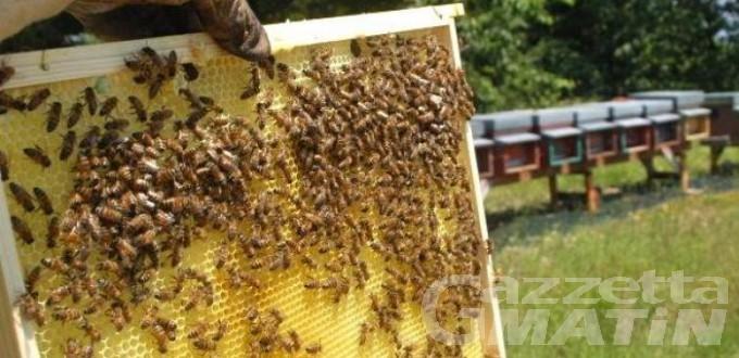 Falso miele valdostano, apicoltore di Gressan patteggia