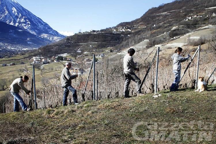 Viticoltura, al via le domande per nuovi impianti