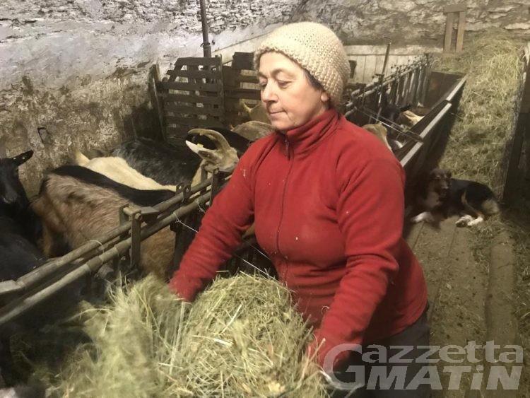 Agroalimentare: contadina riscopre i fagioli e le fave di Nus