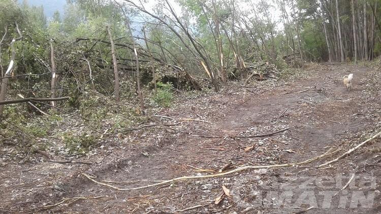 Legambiente: basta tagli di alberi lungo la Dora