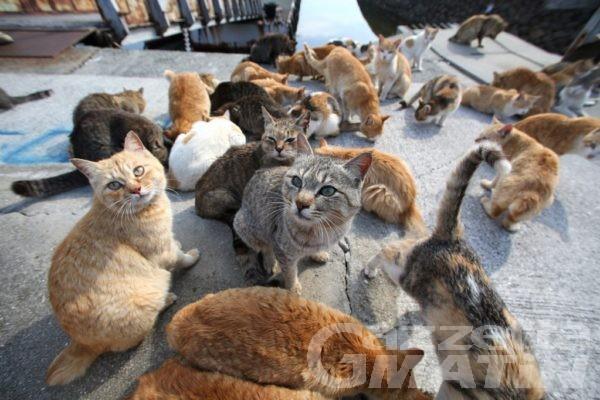 """Animali: """"Se mi ami proteggimi"""", due incontri sulla sterilizzazione dei gatti liberi"""