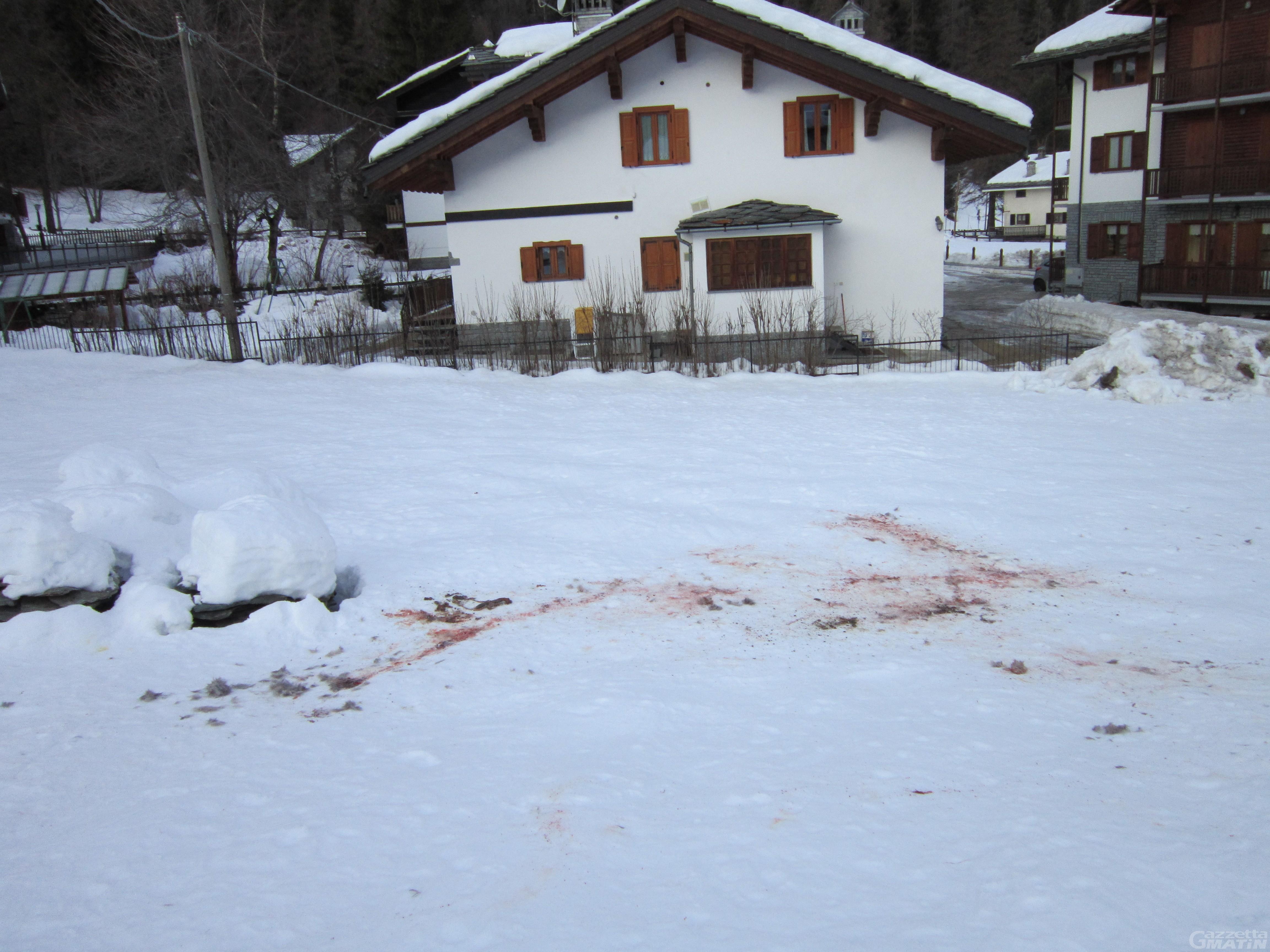 Gressoney-Saint-Jean: la testimonianza dell'attacco di un branco di lupi