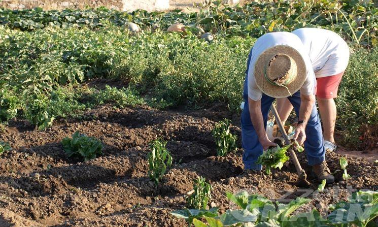 Coronavirus, Valle d'Aosta: vietato coltivare l'orto