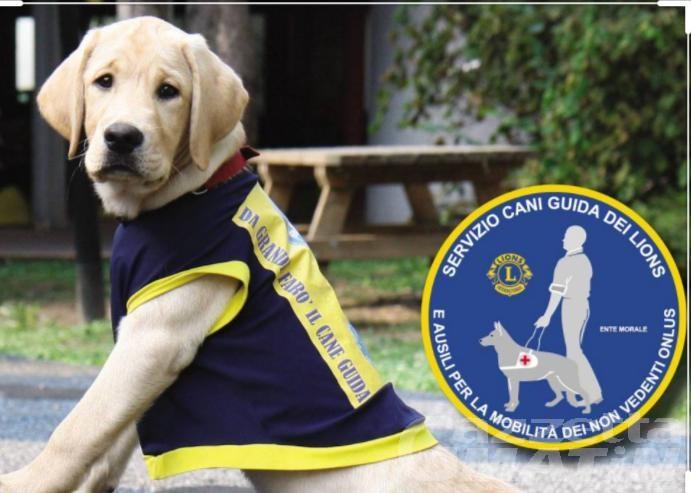 I club Lions Aosta e Mont Blanc donano un angelo a quattro zampe: un cane guida per non vedenti