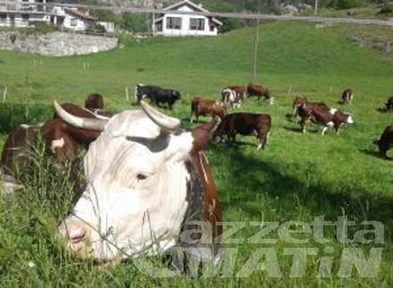 Nuovo Dpcm, Cia Agricoltori VdA: stop alle 18 equivale a chiusura attività
